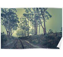 Eucalyptus Tracks Poster