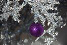 "'Its the holiday season....."" by John Schneider"