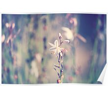 Outback Wildflower Poster