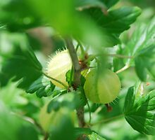 gooseberries by Frances Anyika