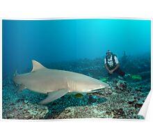 Shark Watching Poster