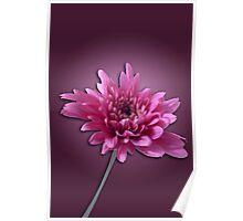 Deep Pink Daisy Poster
