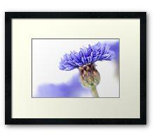 Blue Beauty..... (3) Framed Print