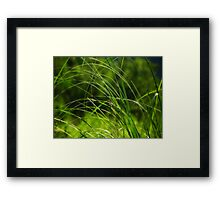 Lying low on a hot & humid day II Framed Print