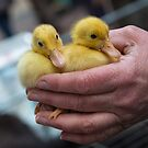 Ducklings by Ellesscee