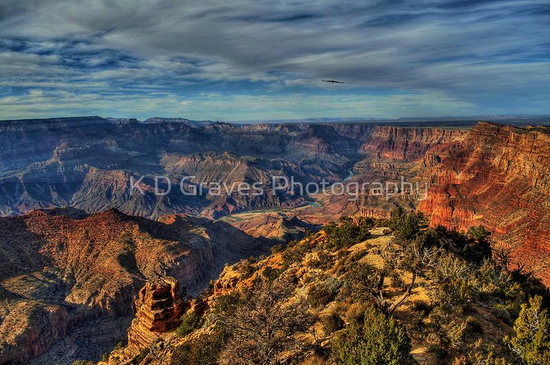 Desert Garden by Diana Graves Photography
