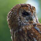 Tawny Owl by JenniferLouise
