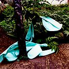 abandoned: gloves in the woods by H J Field