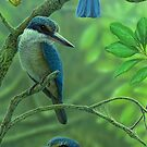 Sacred Kingfishers by Christopher Pope