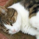 Catnap Disturbed by BlueMoonRose