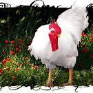 Winston The Rooster by Penny Odom