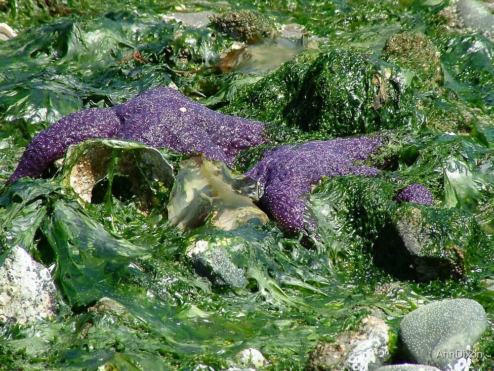 Seaweed & Starfish by AnnDixon