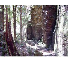 Springbrook Nat, Park QLD. Aust   Photographic Print