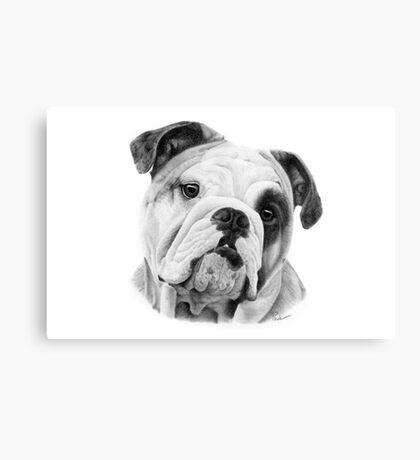 Dog in Pencil Canvas Print