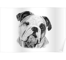 Dog in Pencil Poster