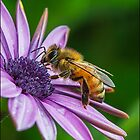 honey bee by Helenvandy