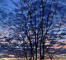Bare Rising  by Christine Barnes