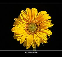 Sunflower Labeled by Alan Harman