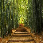 The bamboo's way by SilverEye-RB