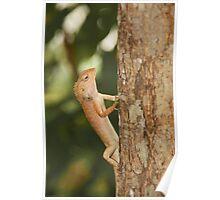 Vietnam lizard Poster