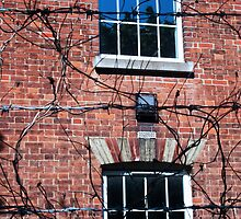 wire and branches by dnilasor