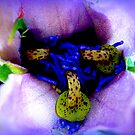 Passiflora detail by ©The Creative  Minds
