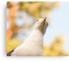 Seagull staring downwards Canvas Print