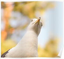 Seagull staring downwards Poster