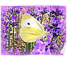 Large White on Lavender Poster