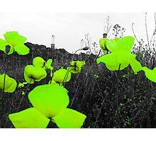Vibrance Photographic Print