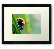 Peek-A-Bee Framed Print