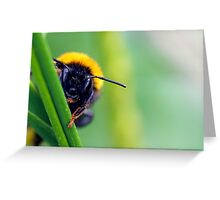 Peek-A-Bee Greeting Card