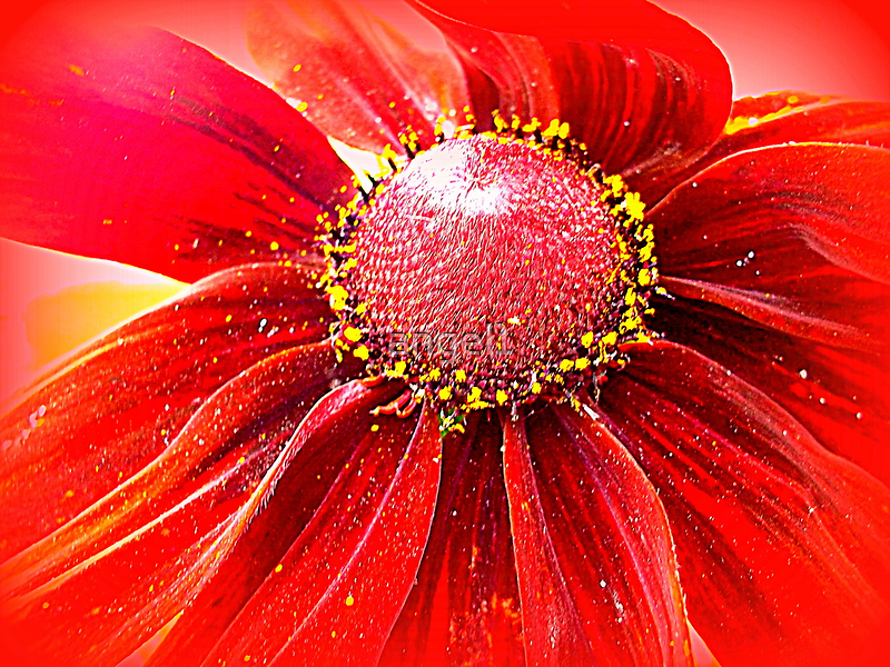 Red Hot by ©The Creative  Minds