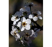 Artistic Blossoms Photographic Print