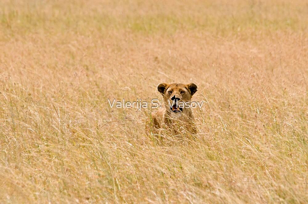 Tough lioness by Valerija S.  Vlasov