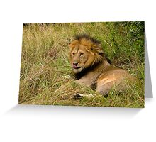 Pittoresque Male Lion  Greeting Card