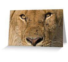 Lion close up Greeting Card