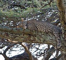 Leopard dreaming of ... by Valerija S.  Vlasov