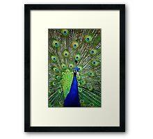 Peacock Display Framed Print
