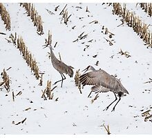 Dancing Crane Photographic Print