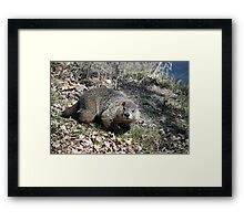 Wow! So That's What You Look Like. Framed Print