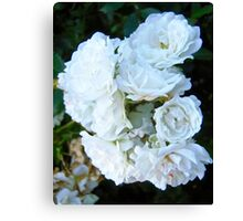 Governor Generals Roses #21 Canvas Print