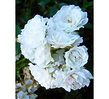 Governor Generals Roses #21 Photographic Print