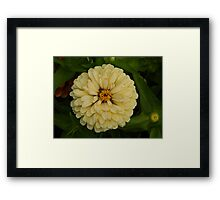 Creamy Belle Framed Print