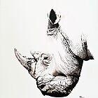 Black Rhino portrait by Paul Fearn