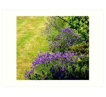 Lavender On Green Art Print