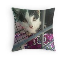 Rescued Kitten Twinkie Throw Pillow