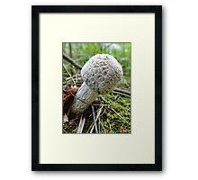 Marshmallow Mushroom Framed Print