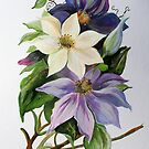 Lilac Clematis by taiche