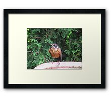 Stop gap Framed Print